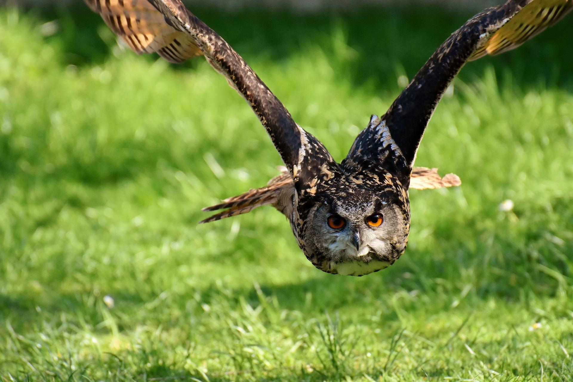 owl-3340957_1920