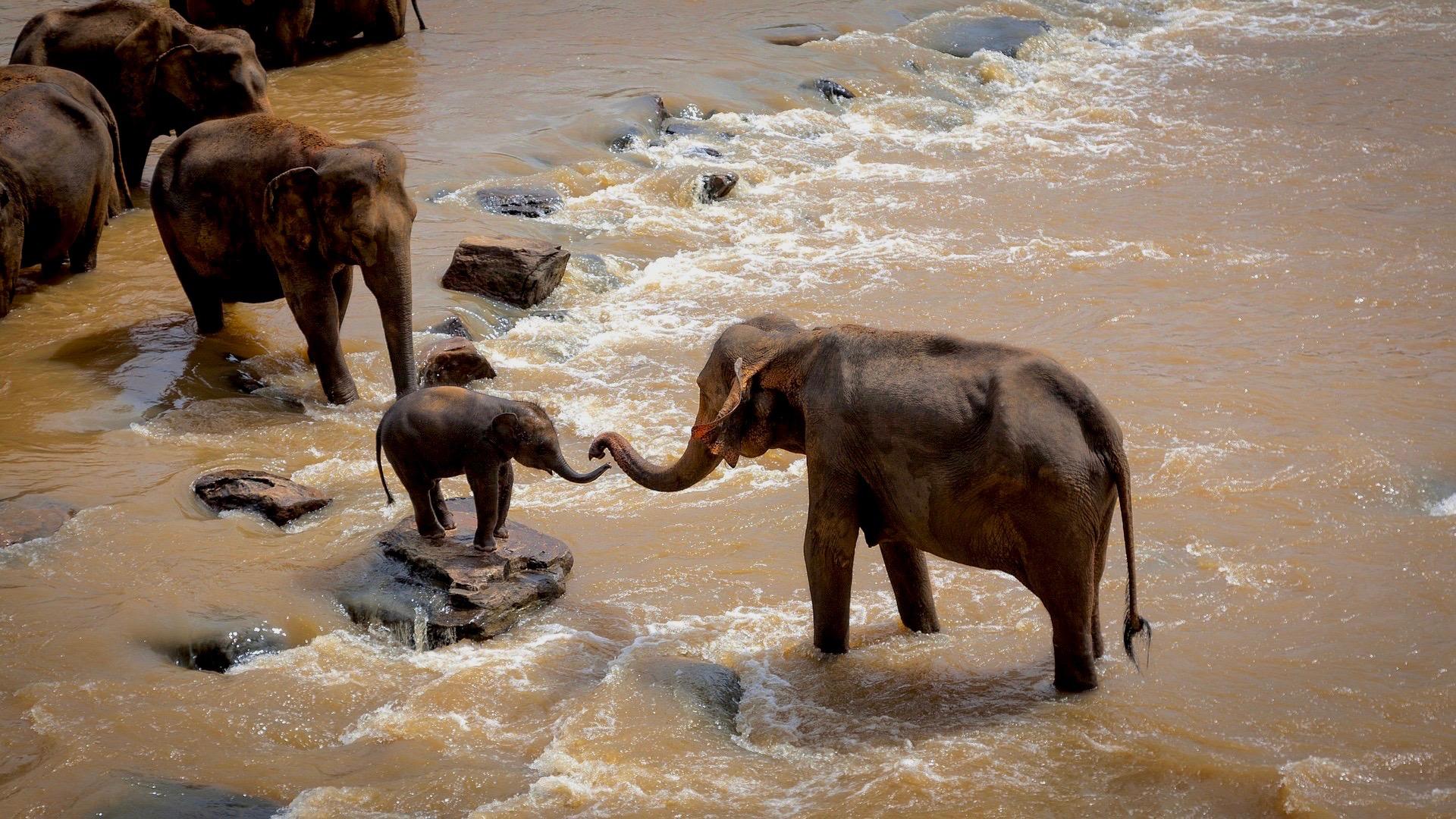 elephants-1900332_1920 3